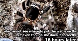 حمله وحشیانه و خوردن موش توسط رتیل