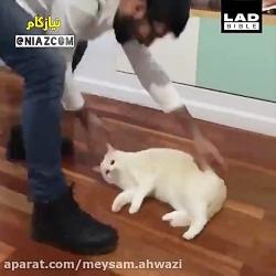 کلیپ فوق خنده دار شیرین کاری گربه بامزه خوشگل ملوس