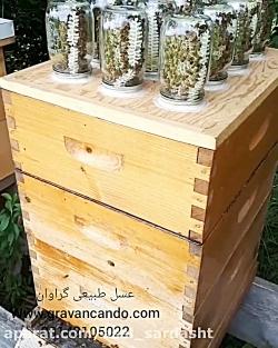 بسته بندی عسل با زنبور عسل