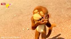 فیلی و میمونک - گل وحشی