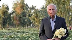 اینجا ایران - قسمت 4 - تاریخ پخش: 960224