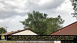 برخورد شاخه های مزاحم با شبکه فشار متوسط