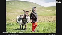 رضا رئیسی ..پریسا حسنی