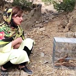 دختر کردستانی سنجابهای...