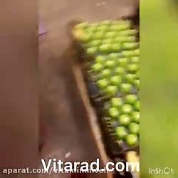 سیب درختی سبز ایران