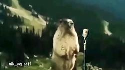 آواز حیوانات رو ببینید ...