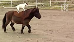 دوستی باورنکردنی حیوان...