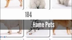 184- حیوانات خانگی