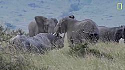 دعوای فیل و کرگدن