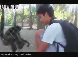 وقتی حیوانات عصبانی می ...