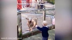 بازیگوشی کودکان با حیو...