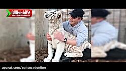 حیوانات وحشی در آغوش ان...