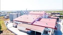 مراحل تولید برنج ایران...