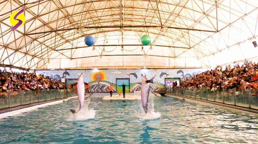 نمایش رویایی دلفینها و شیر دریایی در دلفیناریوم برج میلاد