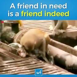 کمک حیوانات به حیوانات