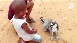 محبت به حیوانات