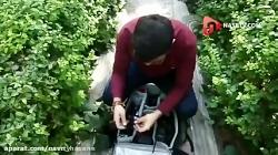 دوربین مخفی انفجار ترو...