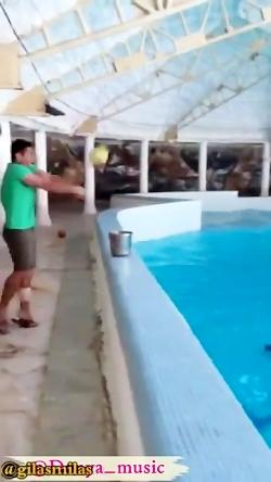 عجب بشریه داره با دلفین...