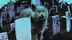 تیزر فیلم قبرستان حیوا...