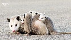 5 تا از بد بو ترین حیوان...