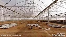 گروه کشاورزی صنعتی سدی...