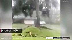 گسترش خسارات طوفان مایکل در آمریکا
