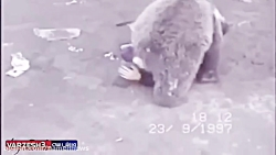 کشتی گرفتن حبیب با خرس!