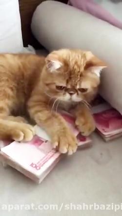 گربه پول پرست شهربازی ww...