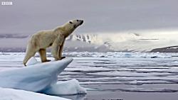 مهارت دیدنی خرس قطبی در...