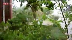 بارش باران همراه با طوف...