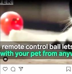 با حیوانات خانگی خود از...