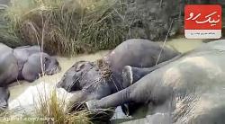 مرگ وحشناک هفت فیل به دلیل برق گرفتگی!