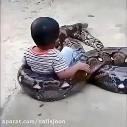 بازی کودک نترس با مار غول پیکر
