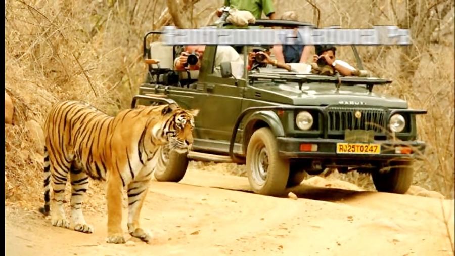 10 تا از بهترین جا هایی که میتوانید در راجستان سفر کنید.