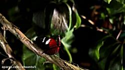 مستند حشرات
