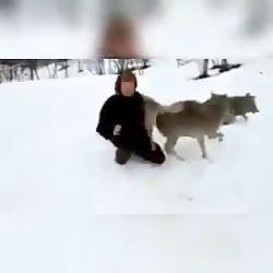 زنی چهارتا گرگ را از مرگ نجات داد و بزرگ کرد و پس از دو سال پیش آن ها رفت.. رفتا