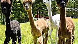 عجیب ترین حیوانات دنیا که کمتر کسی دیده است !!