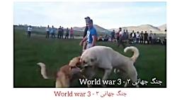 سگ جنگی