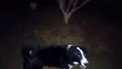 حمله ی سگ قدرجونی به یک مرد