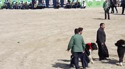 جشنواره بهترین سگ های گله در قهدریجان عالی حتما ببینید