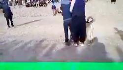 جنگ سگ زبان ترکی