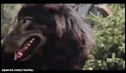 سگی که ۳ توله ی ببر را از چنگال گرگ نجات داد