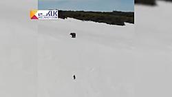 تلاش استثنایی یک توله خرس برای رسیدن به مادرش