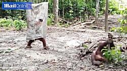 تفریح مهیج و جالب به سبک میمون ها!!