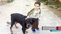 10 نژاد سگ های احساسی و باوفا
