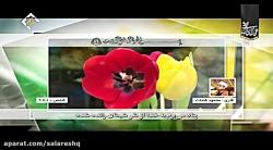 تلاوت جدید استاد محمود شحات هدیه کانال عیدالزهرا عیدالزهراء فرحة الزهراء آپارات