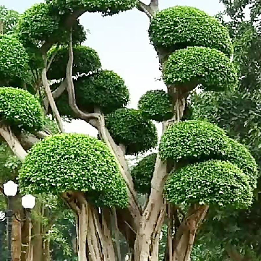 این خیلی جالبه درختانی که تا الان ندیدید