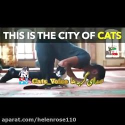 عزیز بودن گربه ها در استامبول و همینطور در اسلام