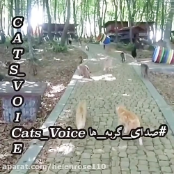 اینجا بهشت گربه هاست!!