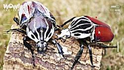10 تا از بزرگترین حشرات در دنیا